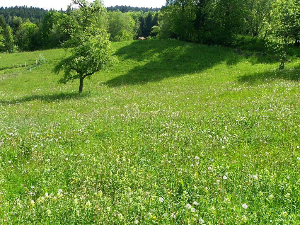 vente terrain LAVAL LAVAL 38190
